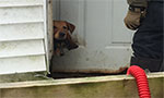 Smuggling dog detained at Panama prison