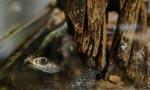 Indian cobra killer gets life for murdering wife
