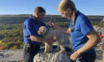 Lucky Dog: Pooch trapped in crevice 5 days rescued, unharm