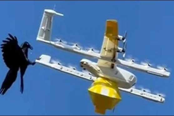 پیاسے کے بعد بھوکا کوا،کھانا ڈیلیور کرنے والے ڈرون پر حملہ،ویڈیو وائرل